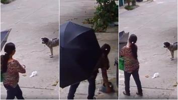 Mujer roba platos de comida y agua de perrito