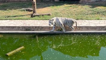 Parque Ecológico La Pastora pide recursos para cuidado de animales