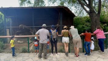 Se desploman ingresos de La Pastora pese a inversiones