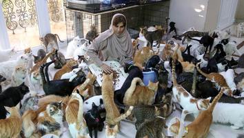 Mujer vive con más de 400 gatos que ha rescatado de la calle