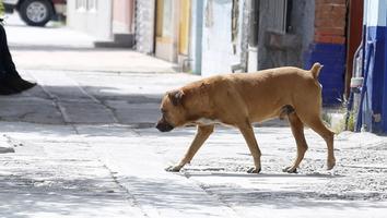 Investigan licitación de vacunas caninas