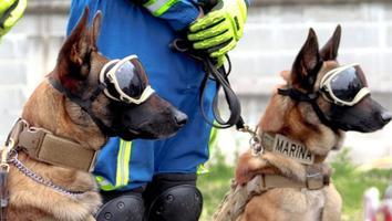 Evil y Ecko, los héroes caninos detrás del rescate de víctimas en Línea 12 del Metro